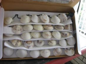 String Seashell Lights For Your Beachy Decor