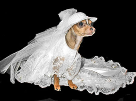 Has Your Wedding Gone To The Dogs Bravobride