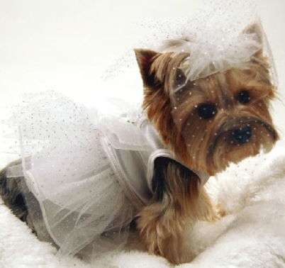 Your dog might out shine you on your big day with this dress/veil combo