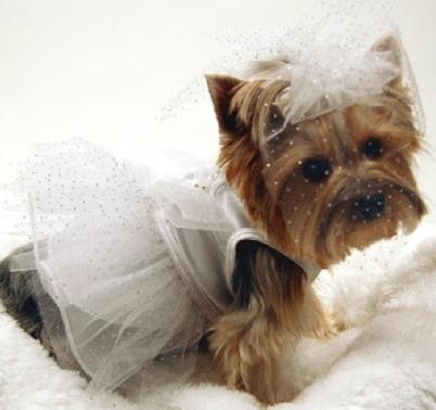 Dogs In Wedding Dresses - Overlay Wedding Dresses