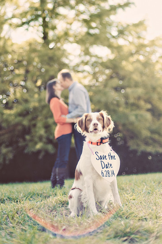 http://www.buzzfeed.com/jessicaprobus/perfectly-adorable-ways-include-your-pet-in-your-wedding#.sclBowJ8j