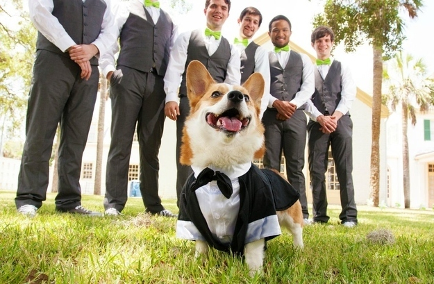 http://www.buzzfeed.com/meganm15/irrefutable-proof-that-corgis-are-actually-secretl-3f0z#.vcYRg1Vmk