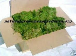 10# Pound Case of Moss wedding reception green table bale reptile bridal escort church outdoor arch bouquets bridesmaid pew garden fairy